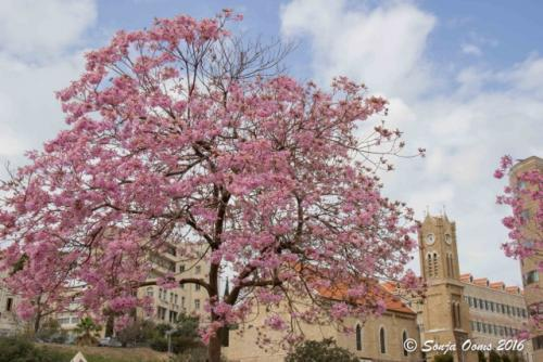 Beirut in spring